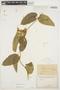 Prestonia mollis Kunth, ECUADOR, H. F. A. von Eggers 14956, F