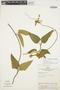 Prestonia mollis Kunth, Peru, D. R. Simpson 432, F