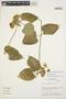 Prestonia mollis Kunth, Peru, M. O. Dillon 6223, F