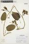 Prestonia mollis Kunth, Peru, S. Leiva G. 909, F