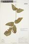 Prestonia mollis Kunth, Peru, A. H. Gentry 22647, F