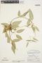 Prestonia mollis Kunth, Peru, P. C. Hutchison 5415, F