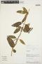 Prestonia mollis Kunth, PERU, A. H. Gentry 61297, F