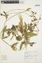 Prestonia mollis Kunth, PERU, K. T. Young 1210, F