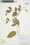 Prestonia mollis Kunth, PERU, D. N. Smith 7049, F
