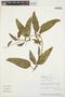 Prestonia mollis Kunth, PERU, J. Campos 6216, F