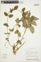 Prestonia mollis Kunth, ECUADOR, B. Hansen 7963, F