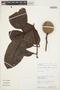 Rhigospira quadrangularis (Müll. Arg.) Miers, PERU, Rod. Vásquez 9572, F