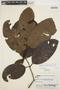 Rhigospira quadrangularis (Müll. Arg.) Miers, BRAZIL, R. de Lemos Fróes 12153/63, F