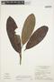Rhigospira quadrangularis (Müll. Arg.) Miers, BRAZIL, G. T. Prance 11807, F