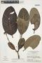 Rhigospira quadrangularis (Müll. Arg.) Miers, BRAZIL, G. T. Prance 12267, F