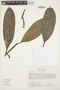 Rhigospira quadrangularis (Müll. Arg.) Miers, COLOMBIA, M. Monsalve B. 1381, F