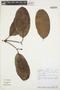 Rhigospira quadrangularis (Müll. Arg.) Miers, PERU, Rod. Vásquez 7755, F
