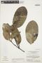 Rhigospira quadrangularis (Müll. Arg.) Miers, BRAZIL, G. T. Prance 12565, F