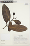 Rhigospira quadrangularis (Müll. Arg.) Miers, COLOMBIA, M. Monsalve B. 1058, F
