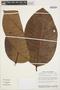 Rhigospira quadrangularis (Müll. Arg.) Miers, BRAZIL, C. A. Cid Ferreira 5756, F