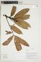 Herbarium Sheet V0323897F