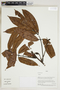 Herbarium Sheet V0323898F