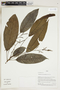 Herbarium Sheet V0323902F