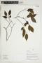 Herbarium Sheet V0323904F