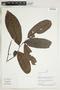 Herbarium Sheet V0323909F
