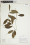 Herbarium Sheet V0323910F