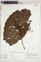 Herbarium Sheet V0323930F