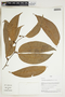 Herbarium Sheet V0323934F