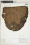Herbarium Sheet V0323959F