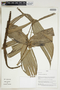 Herbarium Sheet V0323980F
