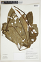 Herbarium Sheet V0324007F