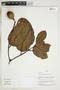 Herbarium Sheet V0324008F
