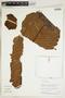 Herbarium Sheet V0324020F