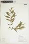 Herbarium Sheet V0324151F