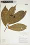 Herbarium Sheet V0324156F