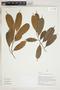 Herbarium Sheet V0324206F