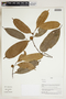 Herbarium Sheet V0324229F
