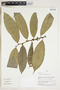 Herbarium Sheet V0324231F