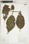Herbarium Sheet V0324279F
