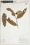 Herbarium Sheet V0324323F