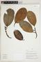 Herbarium Sheet V0324333F
