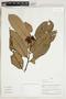 Herbarium Sheet V0324336F