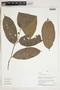 Herbarium Sheet V0324348F