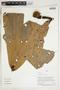 Herbarium Sheet V0324349F