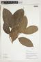 Herbarium Sheet V0324351F