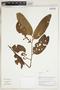 Herbarium Sheet V0324355F