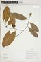 Herbarium Sheet V0324361F