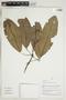 Herbarium Sheet V0415324F