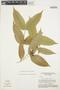 Tabernaemontana rupicola Benth., BRAZIL, G. T. Prance 15073, F