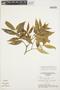 Tabernaemontana rupicola Benth., BRAZIL, G. T. Prance 18047, F